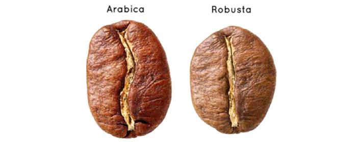 Perbedaan-biji-kopi-arabica-dan-robusta