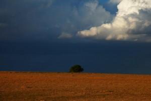 Colorado Prairie  oleh Jaime Rojo (sumber gambar:  huffingtonpost.com)