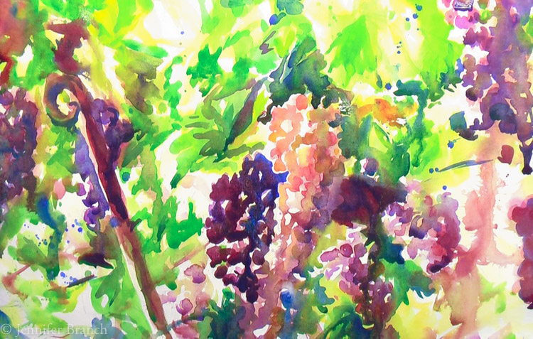 Grapevines-5