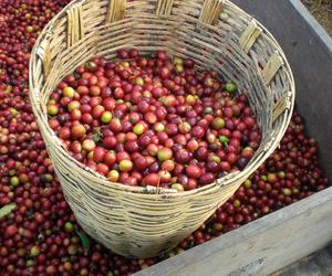 coffee-beans_home